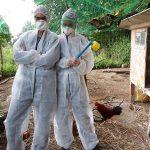 Alexa und Jasmin bei der Bekämpfung der Milben im Hühnerstall